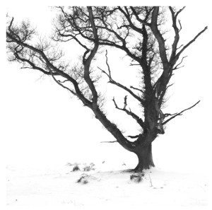 Oak in snow on Dron Hill, spring equinox 2013 (Squire)