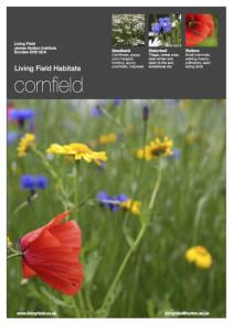 Cornfield poster (Living Field)
