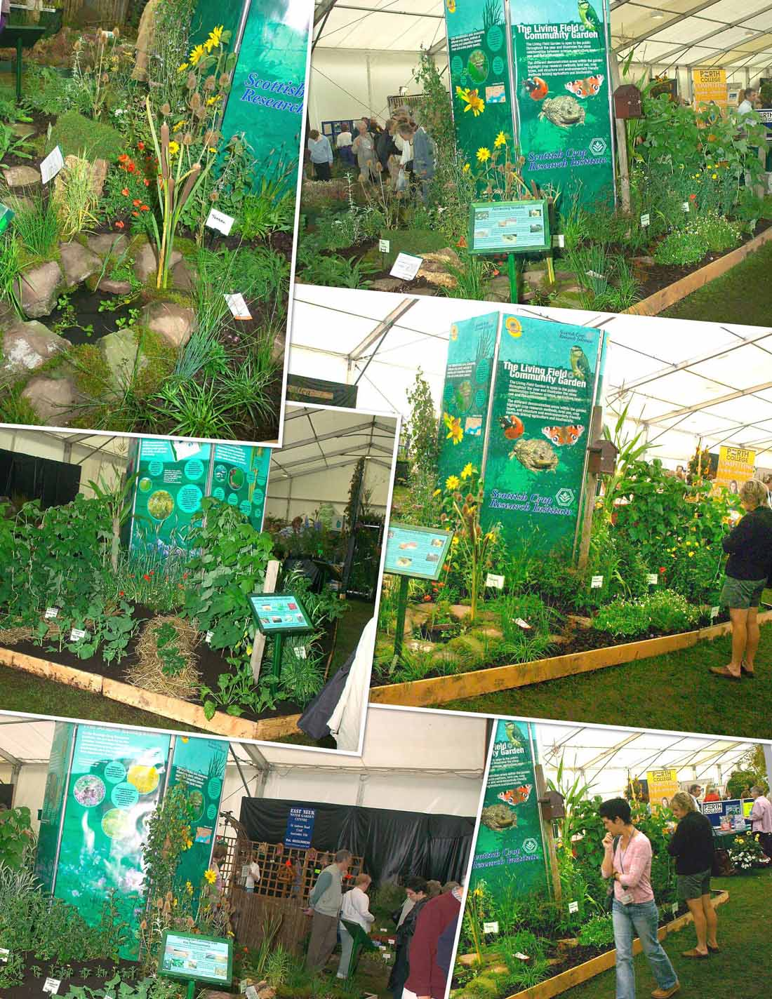 Living Field display at the Dundee Flower and Food Festival in September 2004