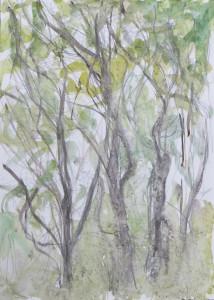 Birch by Jean Duncan