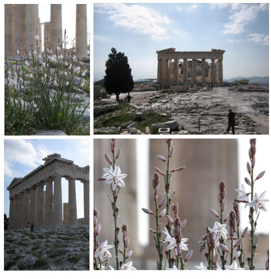 The Acropolis, Athens, and its plants (Living Field / Kathryn Squire)