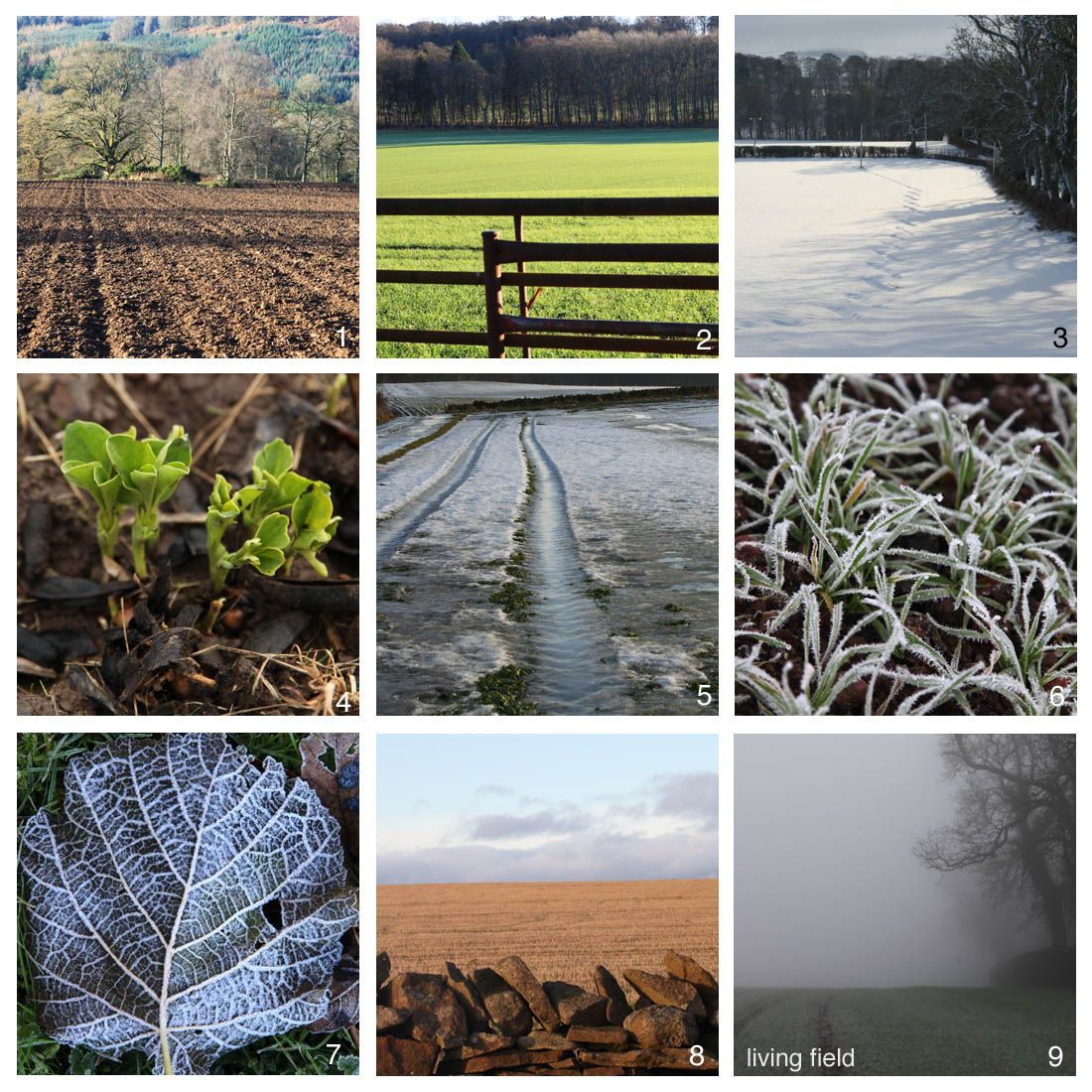 Images around the winter solstice (Living Field / Squire)