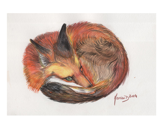 Red fox by Marion Demade (Living Field)