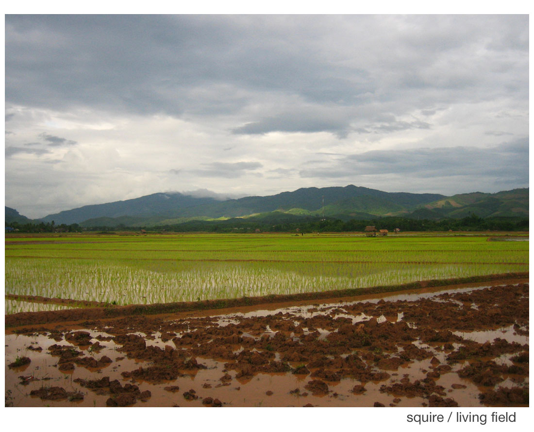 Rice fields on flat land, wet season Laos (Squire)