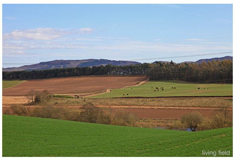 Looking south-east across arable and grazing land from the site of a Roman signal tower, Strathmore (Squire/Living Field)