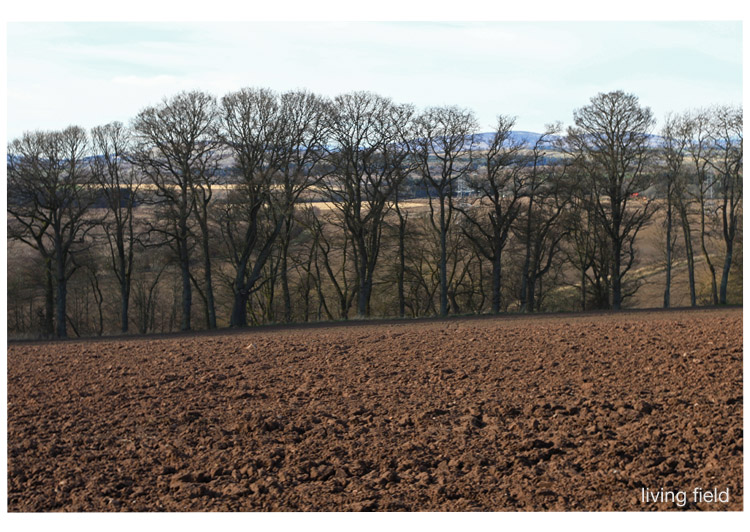 Ploughed land, line of trees through to stubble fields, near the site of the Roman fort of Cardean, Strathmore (Living Field)