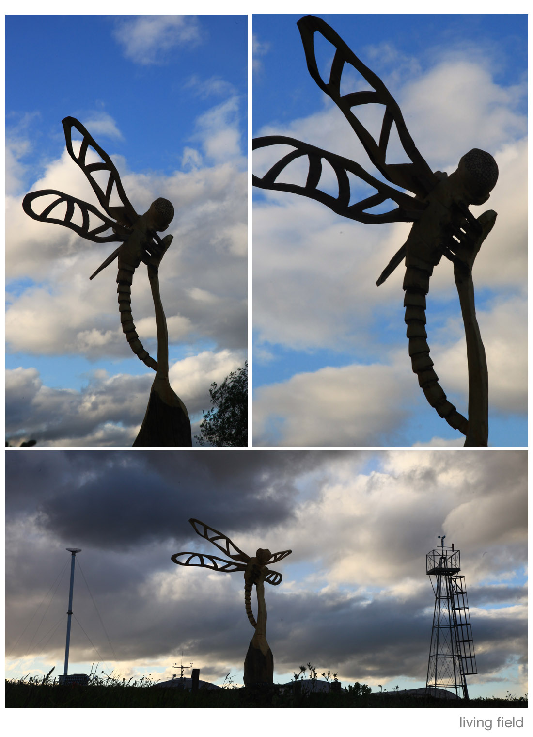 Dragonfly by Dave Roberts installed in the Garden 28 May 2015 (Living Field)
