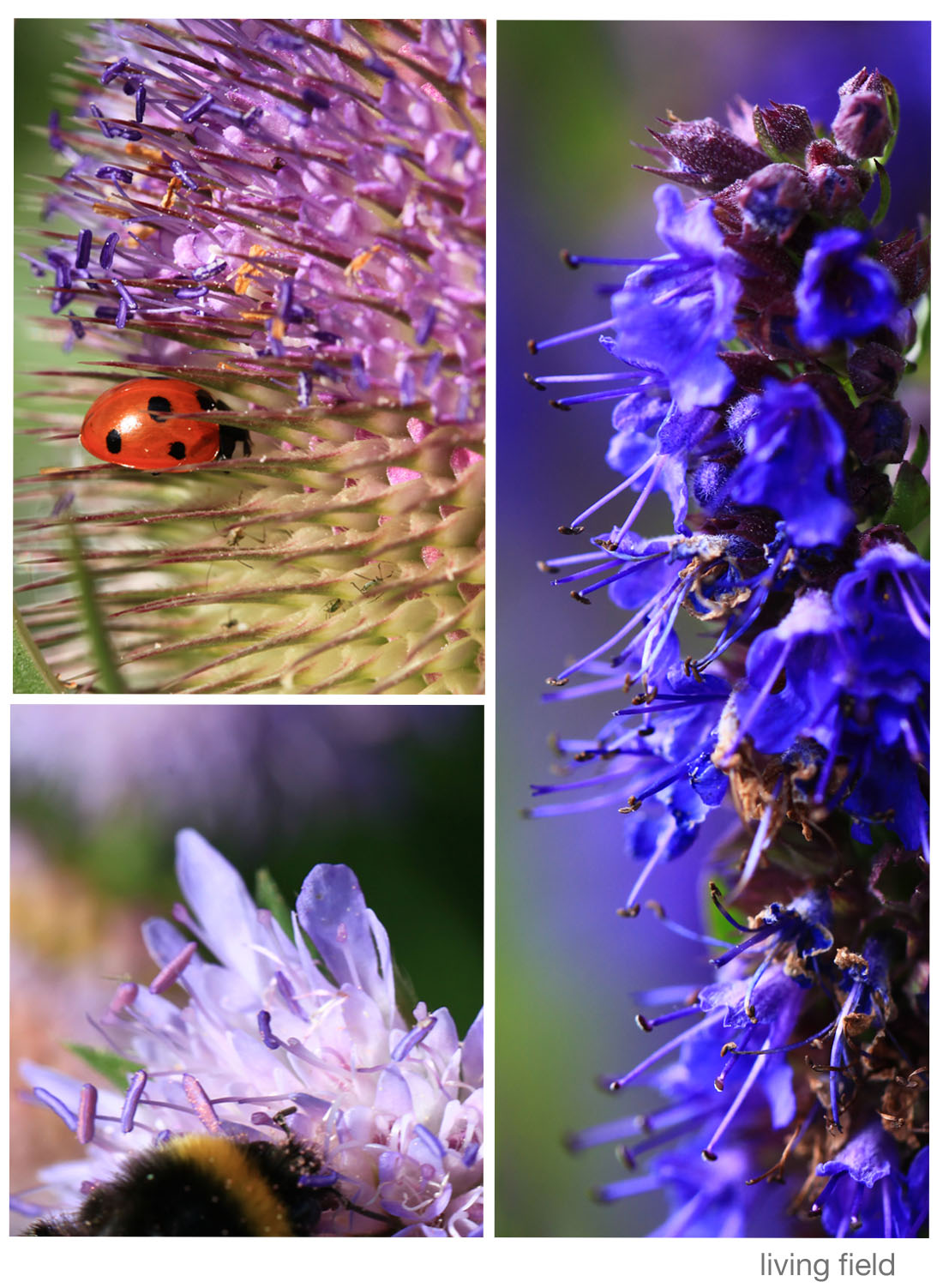 Insect food, in the garden 3 August 2015 (Living Field)