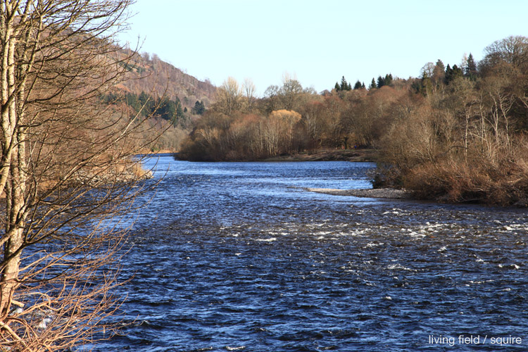 The Tay at Dunkeld looking East, March 2015 (squire / living field)